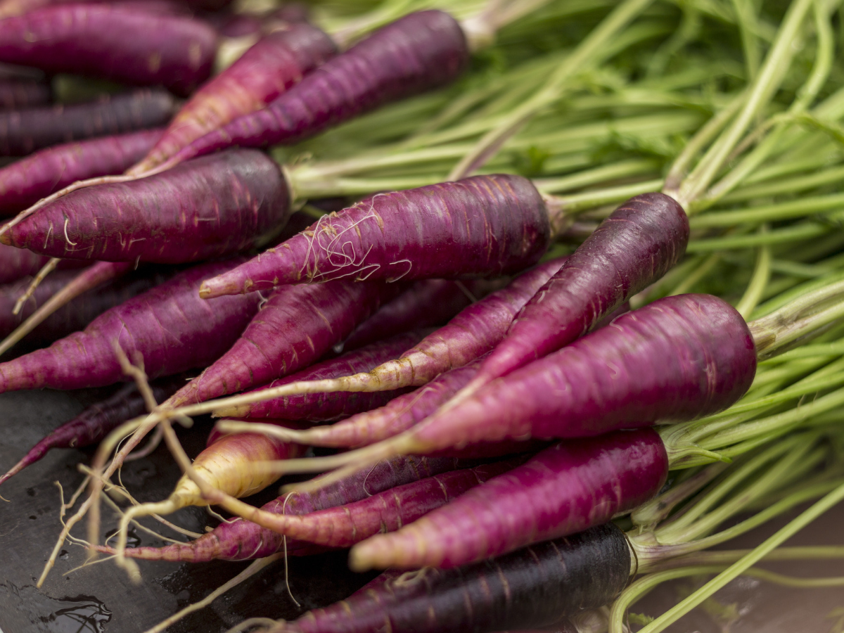 Purple Carrot Benefits - Learn More Here